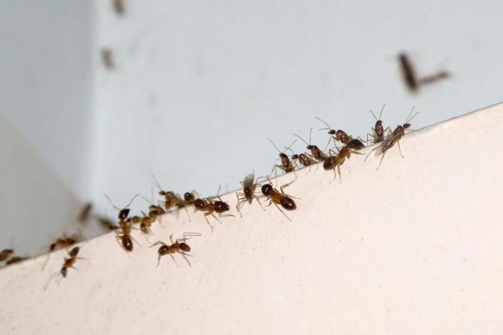 6 Απλά Βήματα για να Απαλλαγείς από τα Μυρμήγκια στην